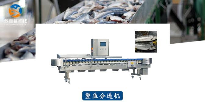 长岛鸡鸭翅分选机代加工生产商 诚信经营 莱州市双鑫自动化设备供应