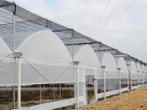 葡萄溫室大棚安裝