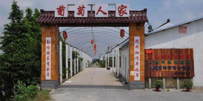 靜安區有哪些葡萄 歡迎咨詢「上海旭祎商貿供應」