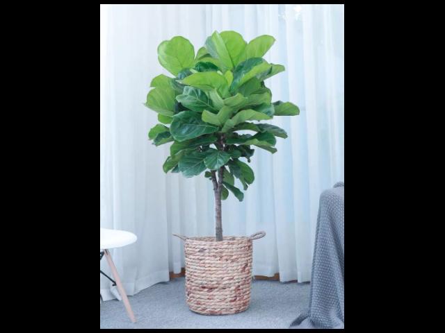 盆景绿植花卉价格多少 有口皆碑「尚卉坊园林绿化供应」