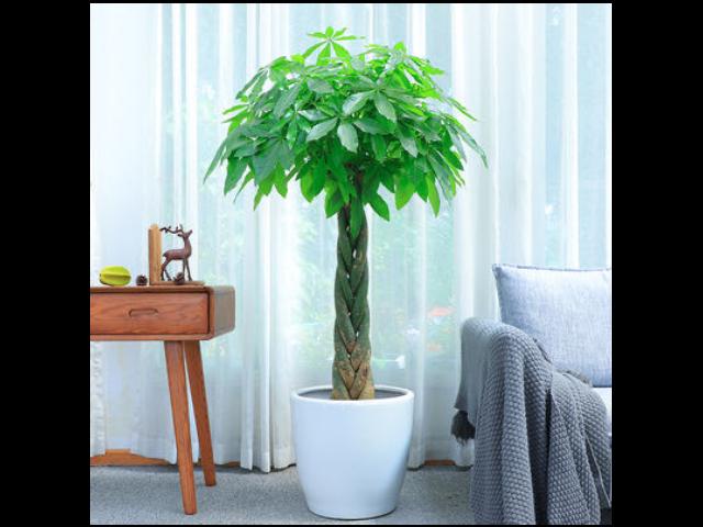 盆栽绿植花卉特色服务 贴心服务「尚卉坊园林绿化供应」