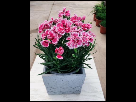 室外花卉綠植特色服務 歡迎咨詢「尚卉坊園林綠化供應」