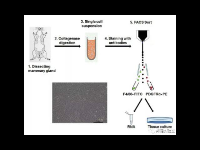 品质好的EdU细胞增殖检测试剂盒购买,EdU细胞增殖检测试剂盒