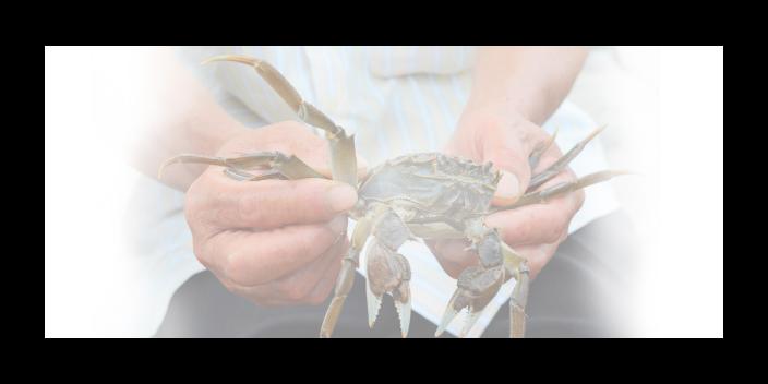黄浦区有口碑的大闸蟹来电咨询