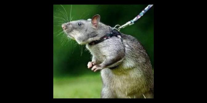 南通飯店滅老鼠聯系方式,滅老鼠