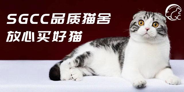 天津赛级买猫贵吗,买猫