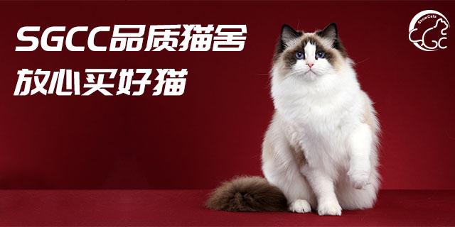 云南国内买猫怎么买