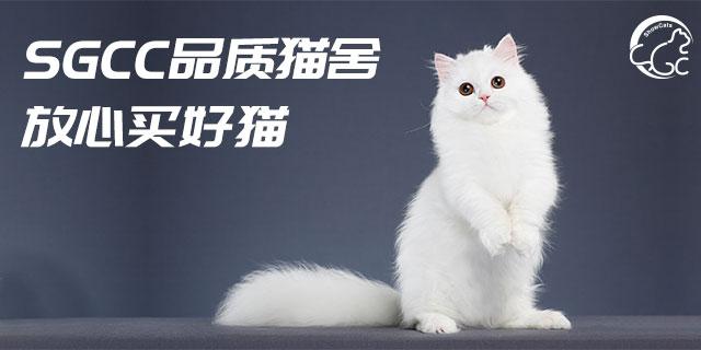 上海买猫品质如何
