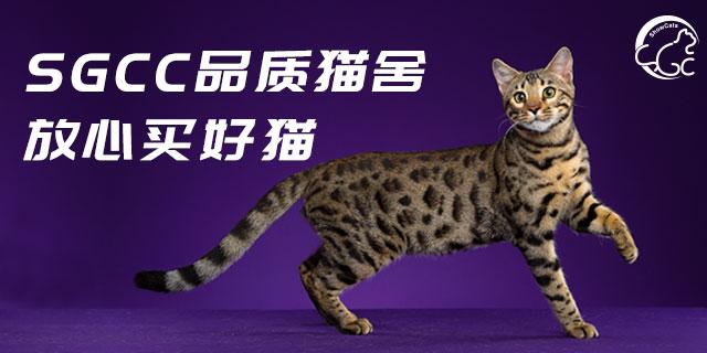 北京国际买猫好吗