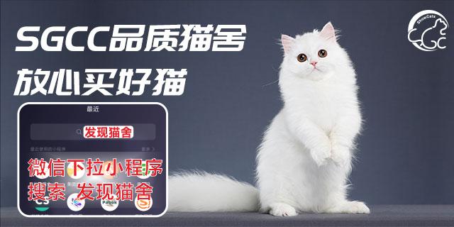 天津国内买猫猫舍推荐「上海世宠网络科技供应」