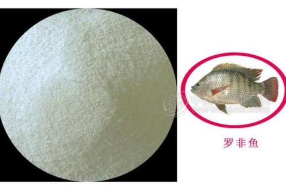供应公司鱼胶原蛋白肽,鱼胶原蛋白肽