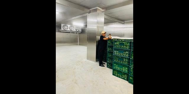 上海微型速冻库造价 诚信服务 上海金惜制冷设备供应