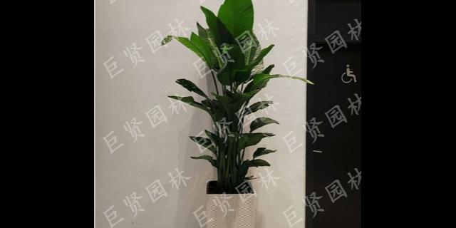 松江区花卉租赁服务「巨贤供」