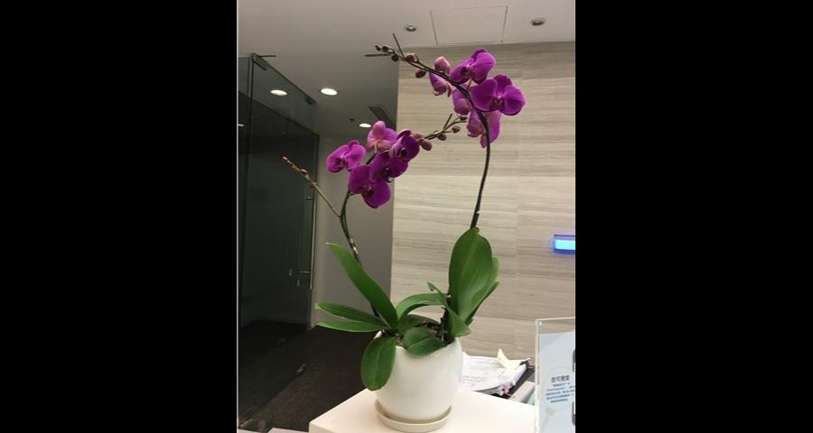 办公室绿植租赁养护「巨贤供」