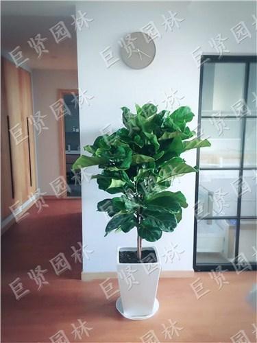 蘇州辦公室花卉養護合同范本 歡迎來電「巨賢供」