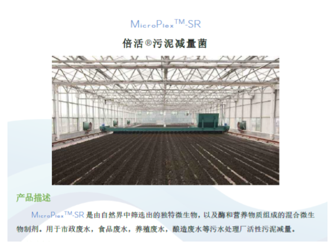 广州硝化菌种XNL哪家好 铸造辉煌 普罗生物技术供应