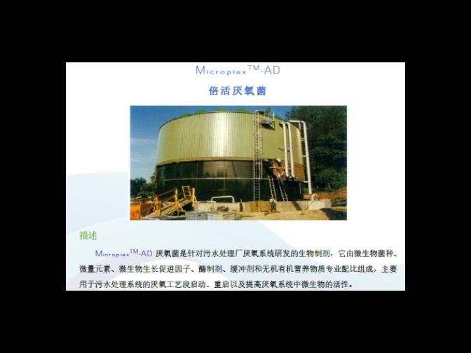 上海清污菌销售厂家 和谐共赢 普罗生物技术供应