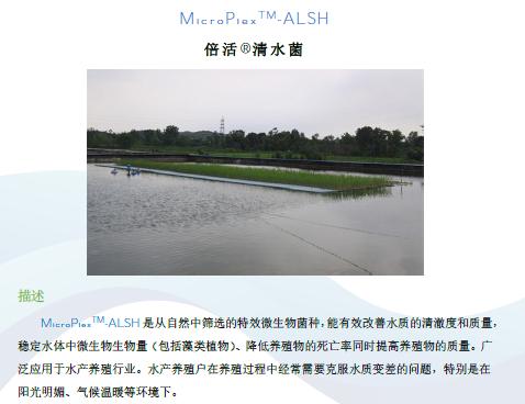 南京UASB菌销售厂家 铸造辉煌 普罗生物技术供应