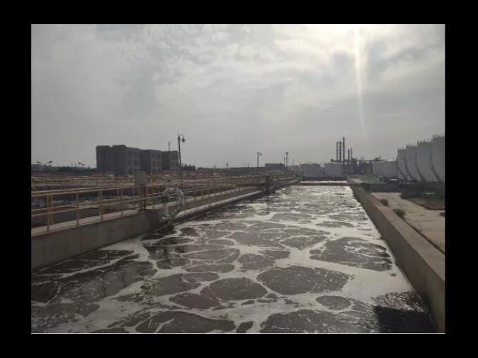 青海污水除臭液氨氮 创新服务 普罗生物技术供应