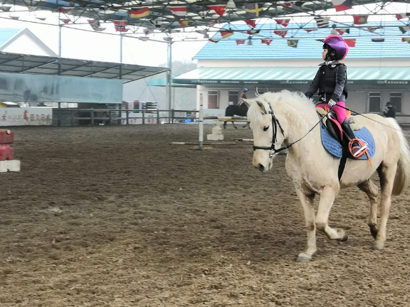 唐龍路現代騎馬運動俱樂部 客戶至上「愛久馬術運動俱樂部供應」