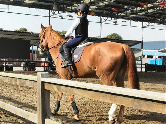 龙吴路成人骑马体验 推荐咨询「爱久马术运动俱乐部供应」