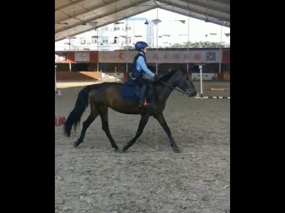 唐龍路兒童騎馬運動俱樂部 客戶至上「愛久馬術運動俱樂部供應」