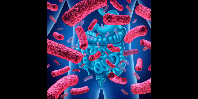 陕西亚健康人群菌群检测风险预测
