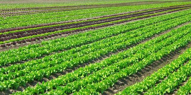 宝山区有哪些土特产近期价格,土特产
