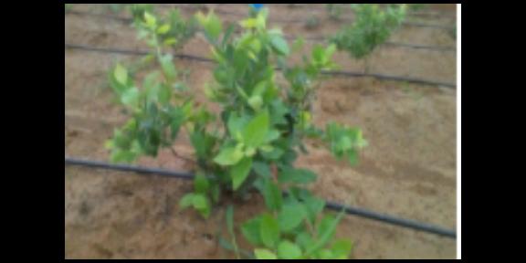 农业滴灌一体化设备安装 欢迎咨询「上海旭农节水灌溉供应」