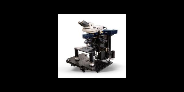 進口ultima2PPLUS雙光子顯微鏡圖像對比度