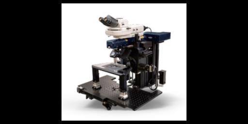 多光子显微镜成像区域 信息推荐「因斯蔻浦供应」