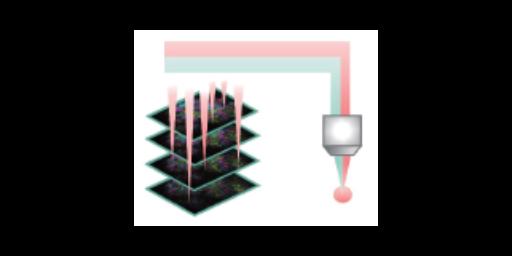 共聚焦多光子显微镜数据分析 欢迎来电「因斯蔻浦供应」