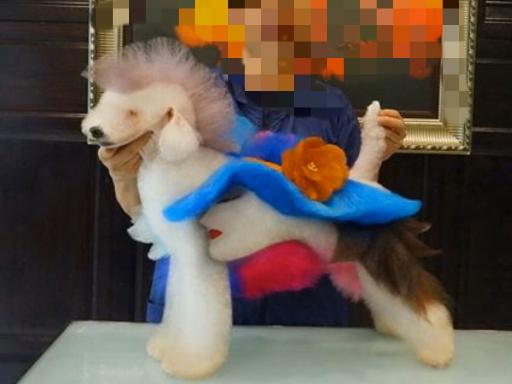 宁波哪里有宠物美容「上海派霏尔宠物美容培训供应」