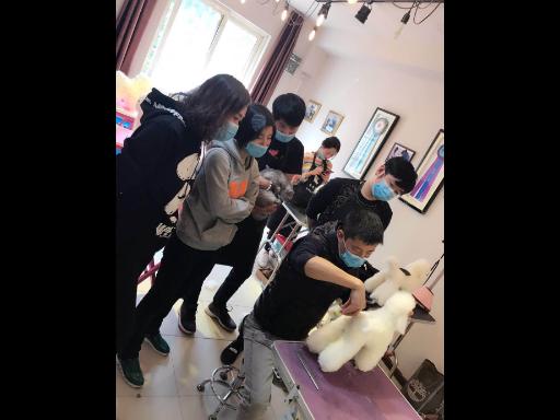 无锡专业宠物聚会「上海派霏尔宠物美容培训供应」