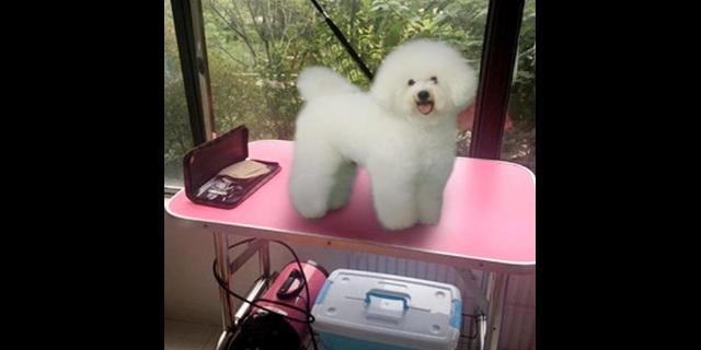 小狗剪毛學校