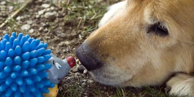 福建通用宠物饲料多少钱