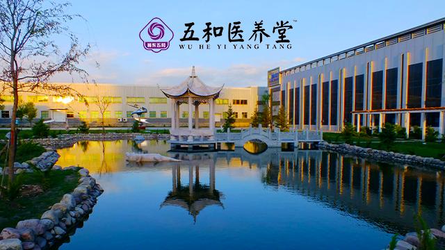 上海哪里有卖苦荞茶 真诚推荐 山西振东五和健康科技供应