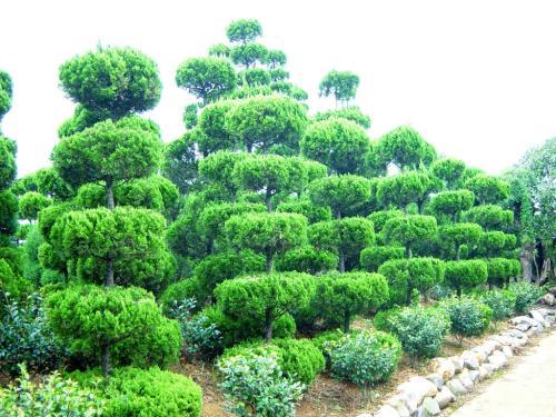 珠海环保苗木哪家好,苗木