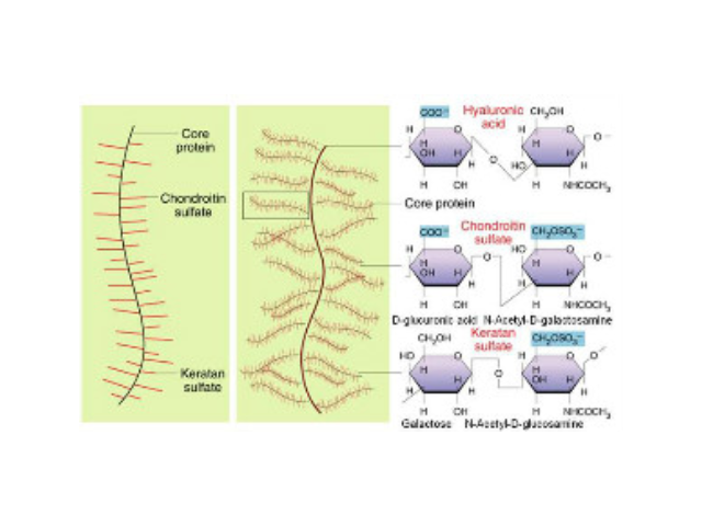 濟南細胞外基質膠進貨價「蘇州君欣生物科技供應」