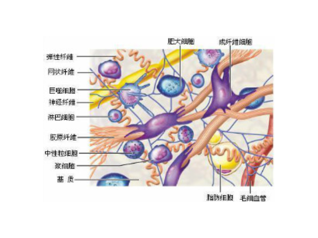 杭州正规细胞外基质胶厂家批发价「苏州君欣生物科技供应」