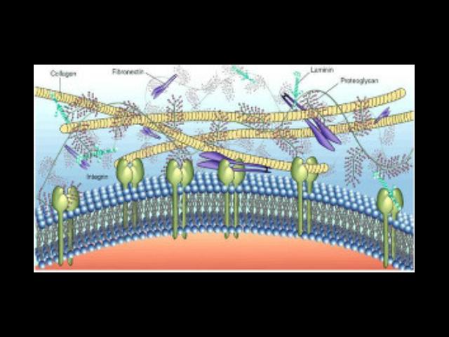 成都正规细胞外基质胶推荐厂家「苏州君欣生物科技供应」