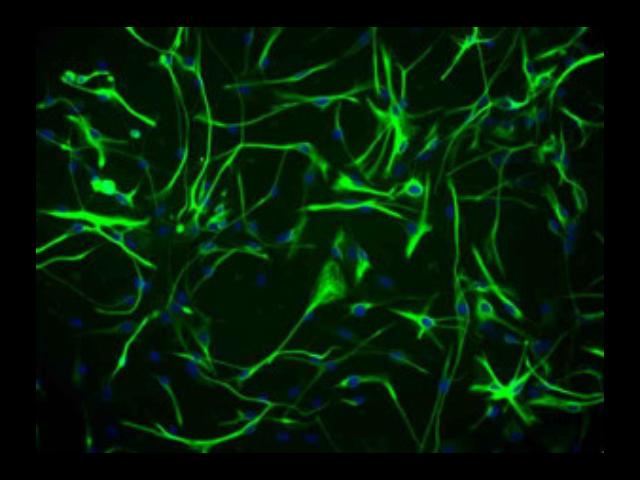 徐州正规原代细胞分离试剂盒厂家供应 苏州君欣生物科技供应