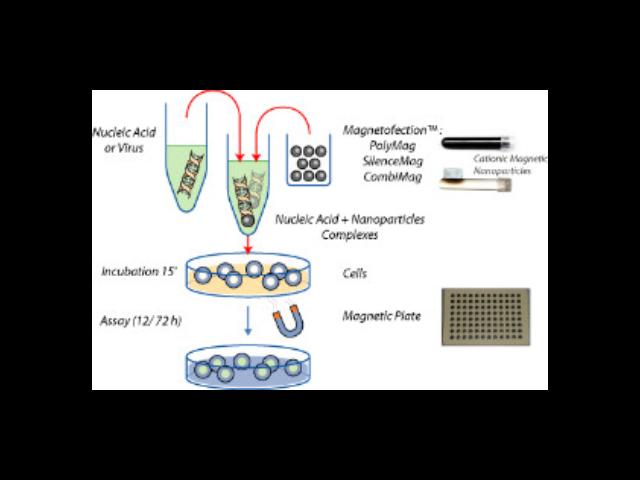 杭州正规细胞高效转染试剂产品介绍