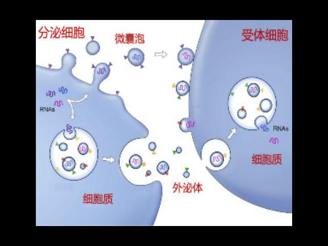 徐州正规外泌体提取试剂单价 苏州君欣生物科技供应