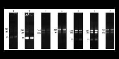 青島RNA提取試劑生產廠家「蘇州君欣生物科技供應」
