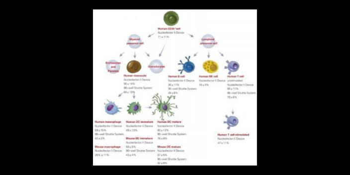 青岛正规细胞高效转染试剂厂家现货「苏州君欣生物科技供应」