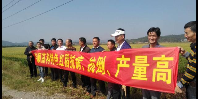 黄山营养的虾稻米厂家