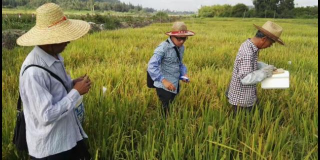 宣城新虾稻米 诚信为本「宇顺高科种业供应」