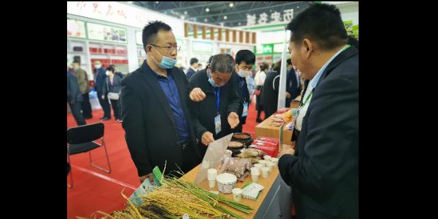 芜湖血糯米便宜吗 欢迎来电「宇顺高科种业供应」