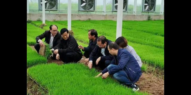 芜湖血糯米的功效 有口皆碑「宇顺高科种业供应」